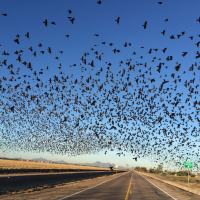 Where to Find Birding Hotspots in Southern Arizona