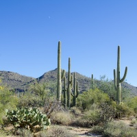 Top three hikes in and around Marana