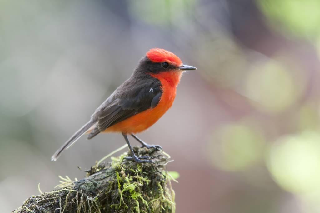 Southeast Arizona Birding Festival