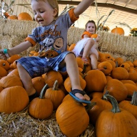 Marana Pumpkin Patch & Farm Festival at Post Farms