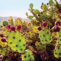A Taste of the Wild: The Marana Gastronomy Tours Expand into the Wilderness