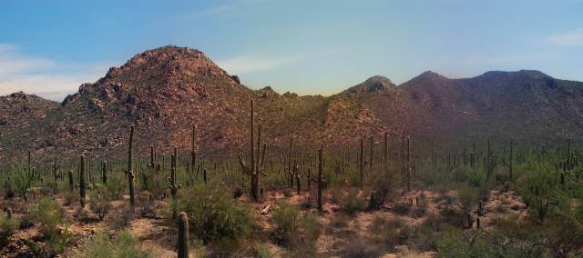 What's new at Saguaro National Park?