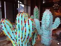 Cactus Candy Garden