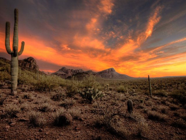 11 Weird and Wonderful Reasons to Visit Tucson