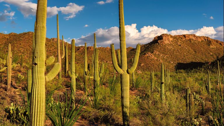 A Guide to Saguaro National Park