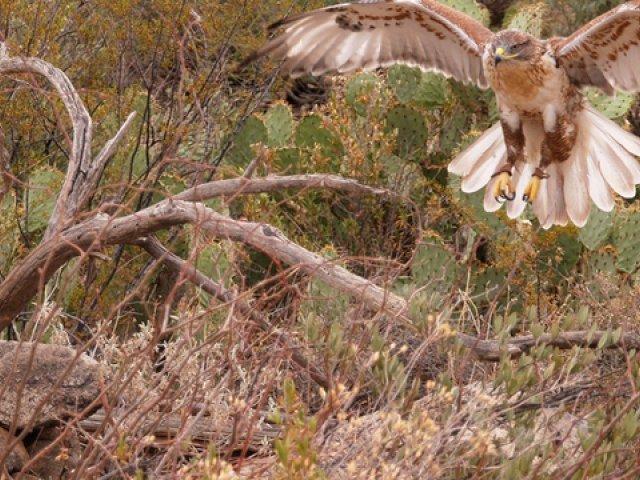 Arizona-Desert-Sonora Museum Contestant for Nationwide Award