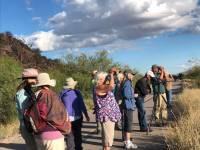 Marana Parks & Recreation Guided Birding at the El Rio Preserve