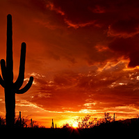 Top Things to Do in Saguaro National Park