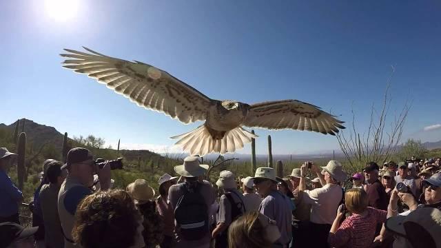 Arizona-Sonoran Desert Museum is Open